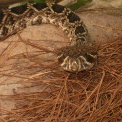 Rattlesnake Slide; The extreme importance of self-care.
